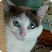 Adopt A Pet :: Babyloves - Middleton, WI