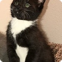 Adopt A Pet :: Popeye - Yorba Linda, CA
