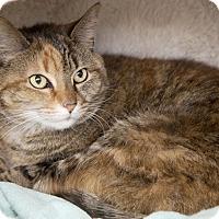 Adopt A Pet :: Mama - Bristol, CT