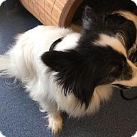 Adopt A Pet :: Jacks - Jupiter, FL