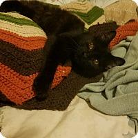 Adopt A Pet :: Sultan - Lodi, CA