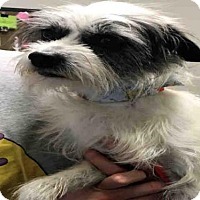 Adopt A Pet :: WOODY - Murray, UT