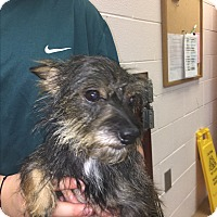 Adopt A Pet :: Fiona - Gadsden, AL