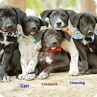 Adopt A Pet :: Meo - Surrey, BC