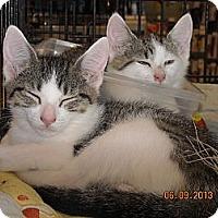 Adopt A Pet :: Savannah - Riverside, RI