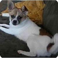 Adopt A Pet :: Flake-FOSTER NEEDED - Seattle, WA