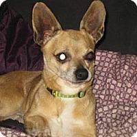 Adopt A Pet :: Veccio - Hilham, TN