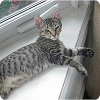 Adopt A Pet :: Speedy - Jeffersonville, IN