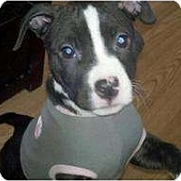 Adopt A Pet :: Dolly - Rochester, NY