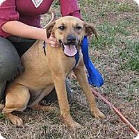 Adopt A Pet :: Brownie - Burlington, VT