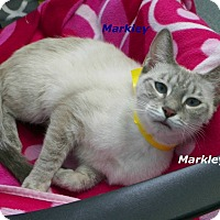Adopt A Pet :: Marley - Dover, OH