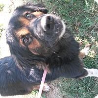 Adopt A Pet :: Bernice - East Hartford, CT