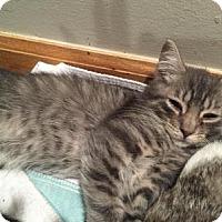 Adopt A Pet :: Bogie - East Hanover, NJ