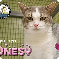 Adopt A Pet :: Onsey - Davenport, IA