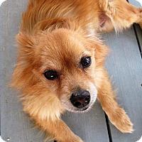 Adopt A Pet :: Rusty - Gilbert, AZ