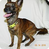Adopt A Pet :: Little Man - Umatilla, FL