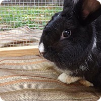 Adopt A Pet :: Babs - Palm Coast, FL