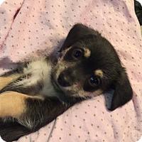 Adopt A Pet :: Twix - Brea, CA