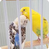 Adopt A Pet :: JACK DAWSON - Dedham, MA