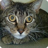 Adopt A Pet :: Archie - Hamburg, NY