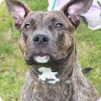 Adopt A Pet :: NYLA - Clayton, NJ