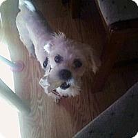 Adopt A Pet :: Allie - Hancock, MI