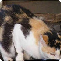 Adopt A Pet :: Farrah - Owasso, OK