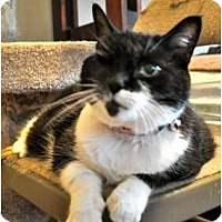 Adopt A Pet :: Frannie - Pasadena, CA
