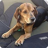 Adopt A Pet :: Dakota (Cody) - Indianapolis, IN