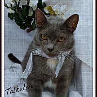 Adopt A Pet :: Clark Gable - Ocean Springs, MS