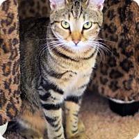 Adopt A Pet :: Malani - Edmond, OK