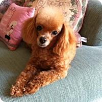 Adopt A Pet :: SPICE GIRL - Melbourne, FL