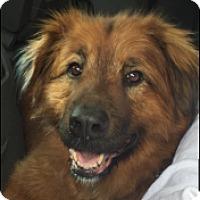 Adopt A Pet :: Oliver - Petaluma, CA