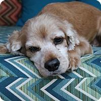 Adopt A Pet :: Happy - Santa Barbara, CA