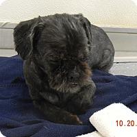 Adopt A Pet :: PRINCE - Sandusky, OH