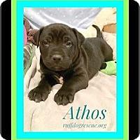 Adopt A Pet :: Athos - Milton, GA