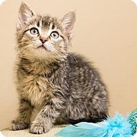 Adopt A Pet :: Brooklyn - Chicago, IL