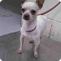 Adopt A Pet :: PEANUT - Conroe, TX
