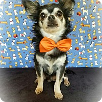 Adopt A Pet :: Gavin - Pluckemin, NJ