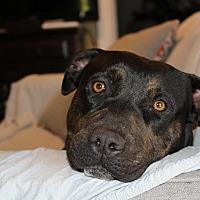 Adopt A Pet :: Marley - San Diego, CA