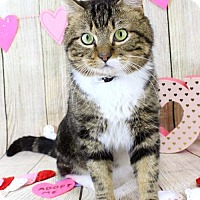 Adopt A Pet :: Torro - Harrisonburg, VA