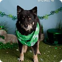 Adopt A Pet :: Claire - Glendale, AZ
