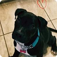 Adopt A Pet :: Buster Brown - Las Vegas, NV