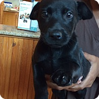 Adopt A Pet :: Luis - Austin, TX