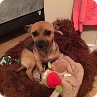 Adopt A Pet :: Cali - Mount Hope, ON