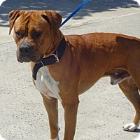 Adopt A Pet :: Saturn - Lathrop, CA