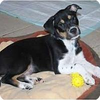 Adopt A Pet :: Cory - Minneola, FL