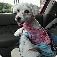 Adopt A Pet :: Peanut - Encinitas, CA