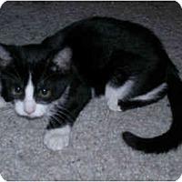 Adopt A Pet :: Lolly - Modesto, CA