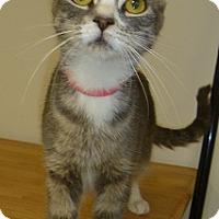 Adopt A Pet :: Felicity - Hamburg, NY